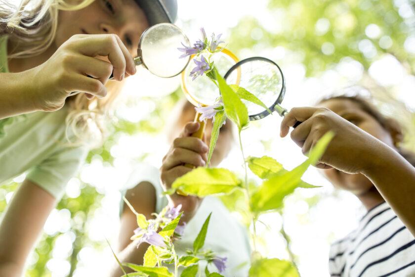 虫眼鏡で観察する