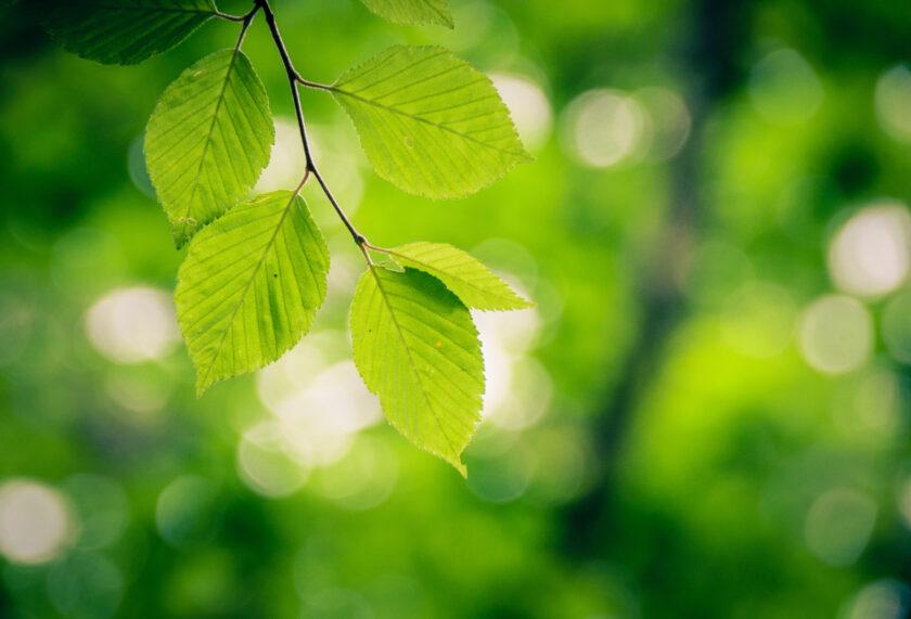 光と緑の葉
