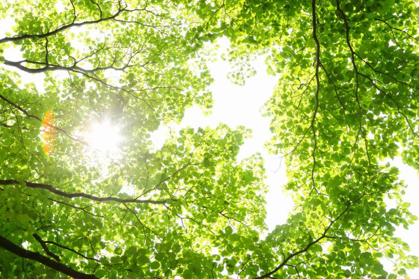 陽光と緑葉