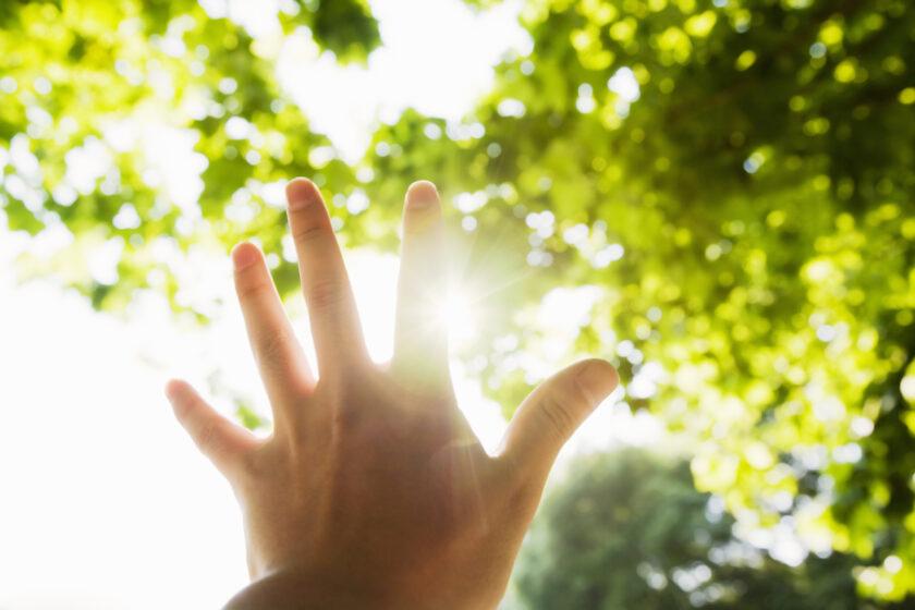 指の間から見える木漏れ日